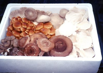 Mushrooms packed for shipping.