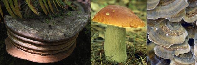 mushroom banner