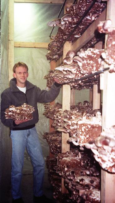 Shiitake Mushrooms.